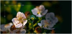 jQuery plugins for images