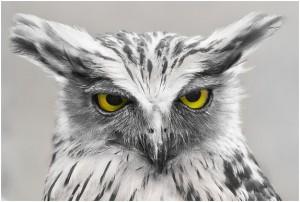amazing bird photography