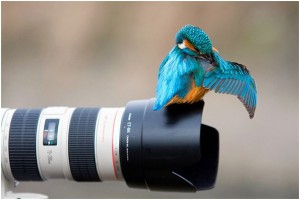 amazing bird photography