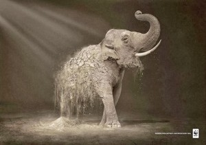 WWF Desertification: Elephant